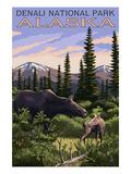 Denali National Park  Alaska - Moose and Calf