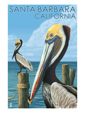 Santa Barbara  California - Pelican