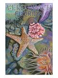 Tidepools - Vero Beach  Florida