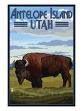 Antelope Island  Utah - Bison Scene