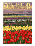 Oak Harbor  Washington - Tulip Fields