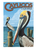 Cayucos  California - Pelicans