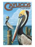 Cayucos  California - Pelicans