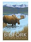 Bigfork  Montana - Moose and Lake