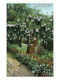 Santa Barbara  California - Monk in Mission Gardens under a Datura Tree