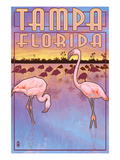 Tampa  Florida - Flamingos