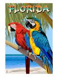 Florida - Parrots
