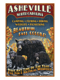 Asheville  North Carolina - Black Bear