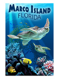Marco Island  Florida - Sea Turtles