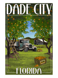 Dade City  Florida - Orange Orchard Scene