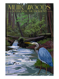 Muir Woods National Monument  California - Blue Heron