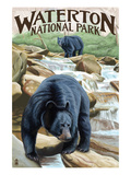 Waterton National Park  Canada - Black Bears and Waterfall