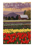 Cambria  California - Tulip Farm
