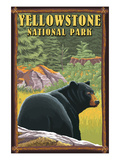 Yellowstone National Park - Black Bear in Forest