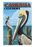 Cambria  California - Brown Pelican