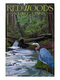 Redwoods State Park - Heron and Waterfall