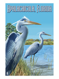 Blue Herons in Grass - Apalachicola  Florida