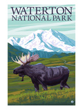 Waterton National Park  Canada - Moose and Mountain