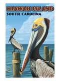 Kiawah Island  South Carolina - Pelicans