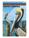 Kiawah Island  South Carolina - Pelicans