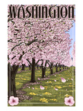 Washington - Cherry Blossoms
