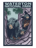 Waterton National Park  Canada - Bear and Cubs in Tree
