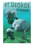 Manatees - St George  Florida
