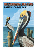 Seabrook Island  South Carolina - Pelicans