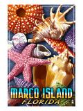 Marco Island  Florida - Shells Montage
