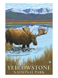 Yellowstone National Park - Moose Drinking in Lake