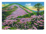 Maggie Valley  North Carolina - View of Purple Rhododendron in Bloom Near Blue Ridge Parkway
