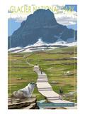 Logan Pass - Glacier National Park  Montana
