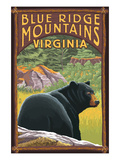 Blue Ridge Mountains  Virginia - Bear in Forest
