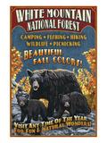 White Mountains  New Hampshire - Black Bear