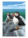 Puffins - Atlantic