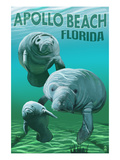 Apollo Beach  Florida - Manatees
