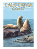 California Coast - Sea Lions