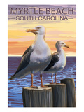 Myrtle Beach  South Carolina - Seagulls