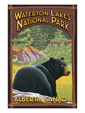 Waterton Lakes National Park  Canada - Bear in Forest
