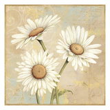 Beautiful Daisies I