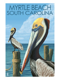 Myrtle Beach  South Carolina - Pelicans