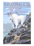 Waterton-Glacier International Peace Park - Mountain Goat and Baby