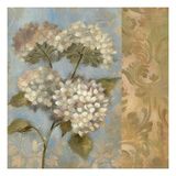 Hydrangea on Soft Blue