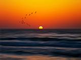 Oiseaux au soleil couchant Papier Photo par Josh Adamski