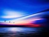 Blue Geese Papier Photo par Josh Adamski