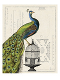 Peacock Birdcage I