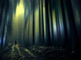 Marche dans les bois Papier Photo par Josh Adamski