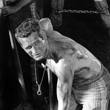 Cool Hand Luke  Paul Newman   1967