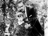 The Fly  Charles Herbert  Vincent Price  1958  Spider Web