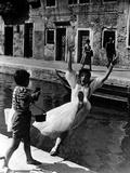 Summertime  Gaitano Audiero  Katharine Hepburn  1955